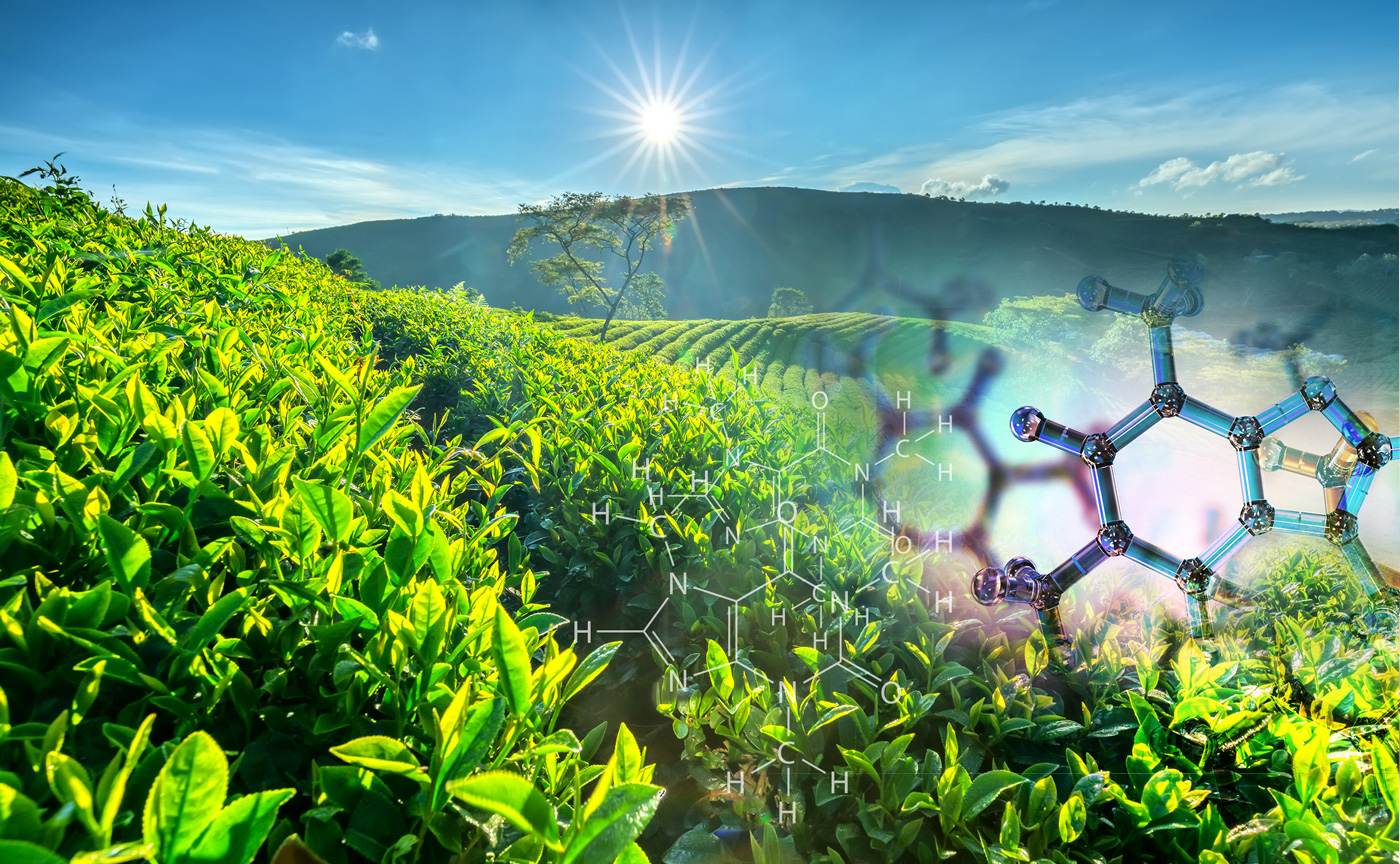 NutriScience's InnovaTea® Natural Caffeine 98% (from Tea) is now Non-GMO Project Verified